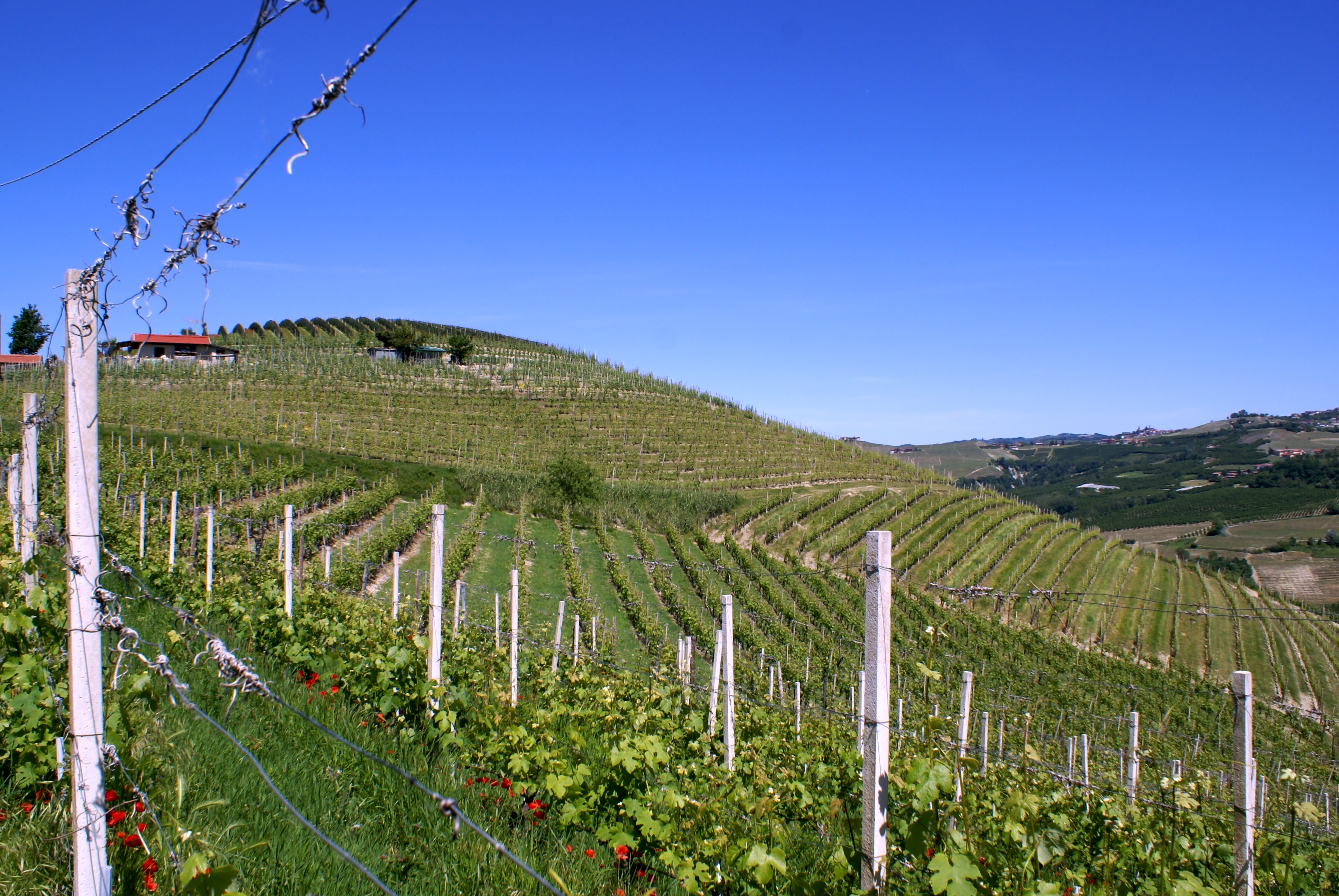 Prapó vineyard Barolo Italy