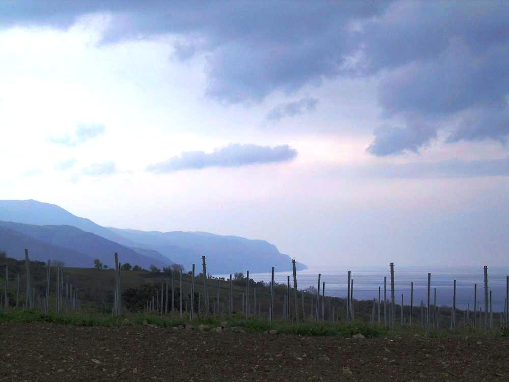 Paşaeli vineyards