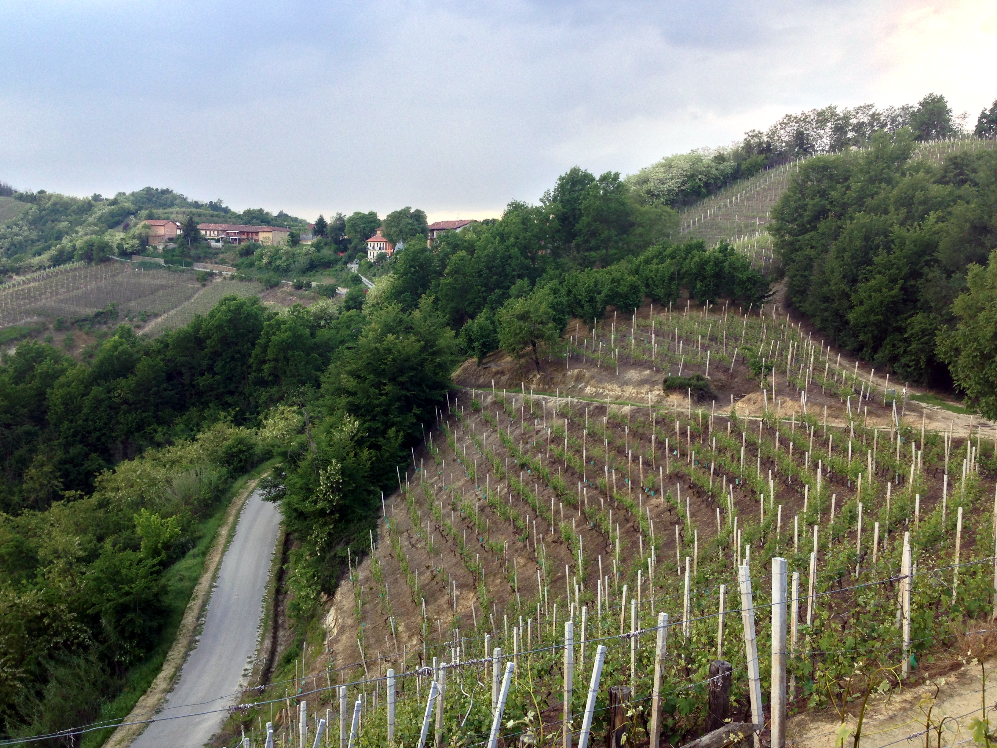 A view of the middle part of Valmaggiore vineyard.