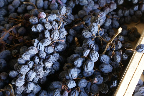 Amarone, a dry wine from raisined grape, is unique in the world.