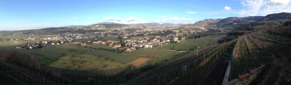 Negrar vineyard panorama